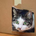 Todos sabemos que las cajas son adoradas por los gatos (iStock)
