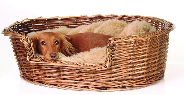 Una cesta reciclada es una camita perfecta (iStock)