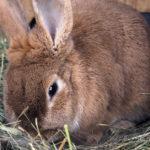 El heno es otro básico para estos animales (iStock)