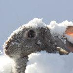 Hay que protegerlos de temperaturas extremas (iStock)