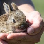 No hay duda de que los conejos son adorables (Pixabay)