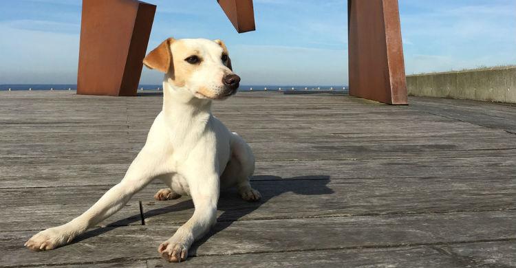 Pipper, el primer perro 'influencer' (Foto: pipperontour.com)