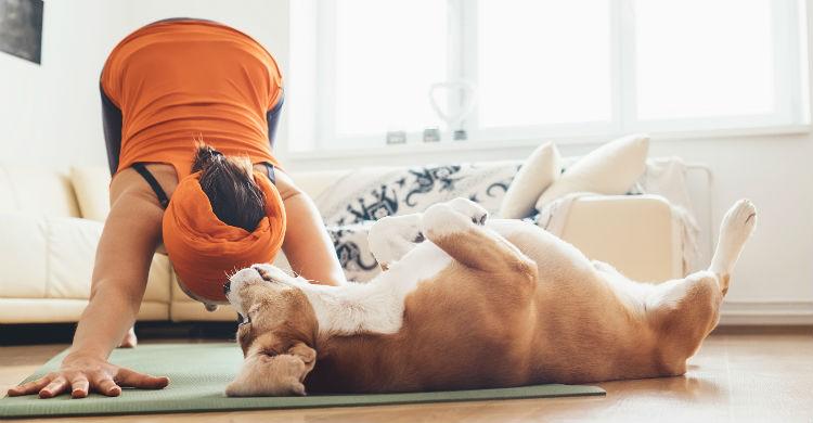 Conectar con tu perro es uno de los múltiples beneficios que ofrece esta práctica (Foto: iStock)