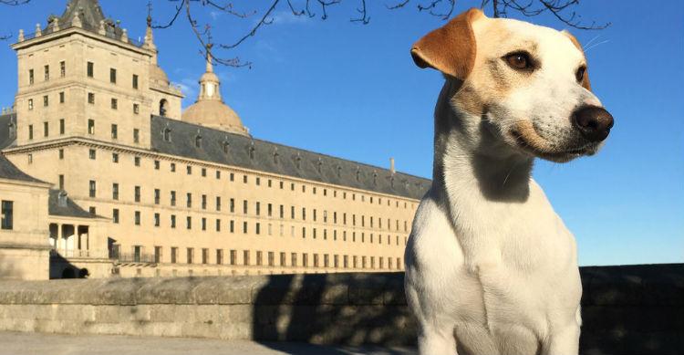 Este Parson Russell Terrier recorre España gracias a su dueño periodista (Foto: pipperontour.com)