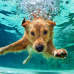 4. Asociar el momento del baño con un rato entretenido (Istock)