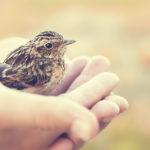Cuidar a un pájaro bebé requiere tiempo (iStock)