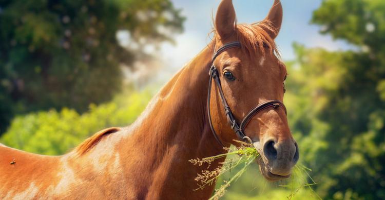 Image result for niveles de azucar en caballos