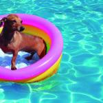 Para piscinas pequeñas esto les irá genial (iStock)