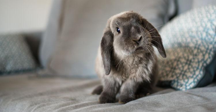 Hay que desparasitar muy bien a tu mascota para evitar enfermedades graves (Foto: iStock)