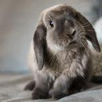 Conejo (Foto: iStock)