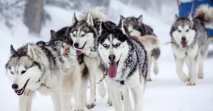 Los perros tienen un sexto sentido increíble (Istock)