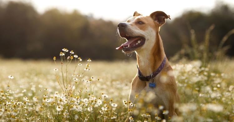 Aunque sean bonitas, algunas plantas pueden resultar muy tóxicas para tu mascota (Istock)