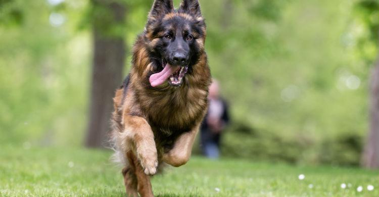 Las pulseras de actividad específicas para animales están proliferando (Foto: iStock)
