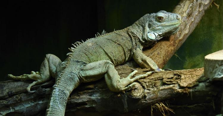 Nada de darle pienso específico para otros animales o será perjudicial para tu mascota (Foto: iStock)