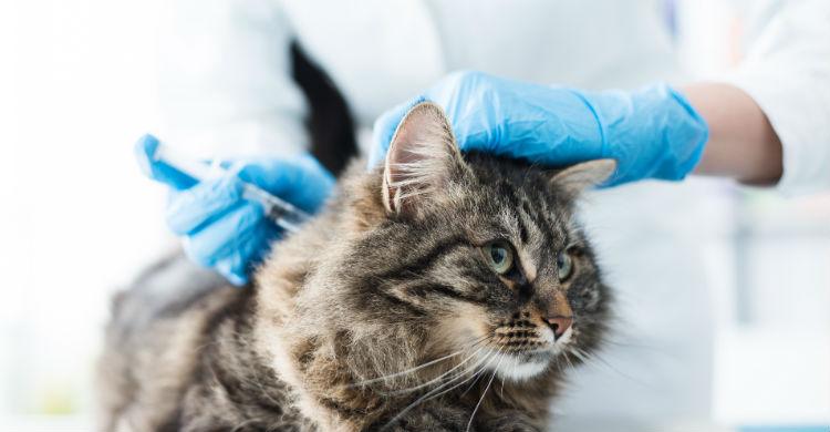 Hay vacunas que requieren una dosis de recuerdo (Foto: iStock)