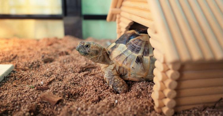 El tamaño de su hábitat es uno de los aspectos fundamentales a tener en cuenta (Foto: iStock)