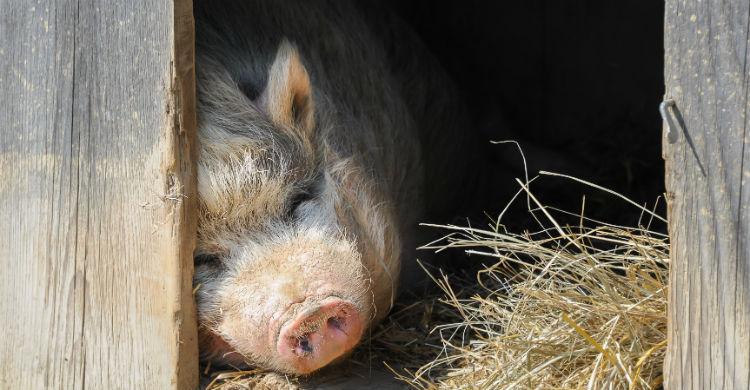 Son animales que requieren compresión y cariño (Foto: iStock)