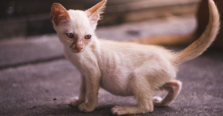 Los síntomas que presente el animal serán determinantes en un diagnóstico acertado (Foto: iStock)