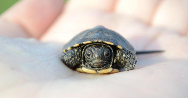 La limpieza de su hábitat y la limpieza de la propia tortuga son muy importantes (Foto: iStock)