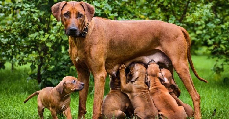 Lo mejor es que consultes con tu veterinario (Istock)