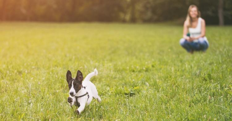 No olvides que cuando son cachorros pierden de forma más fácil la atención (Istock)