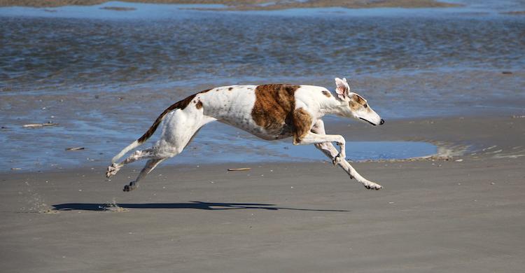 Son animales muy elegantes y con una genética privilegiada (iStock).