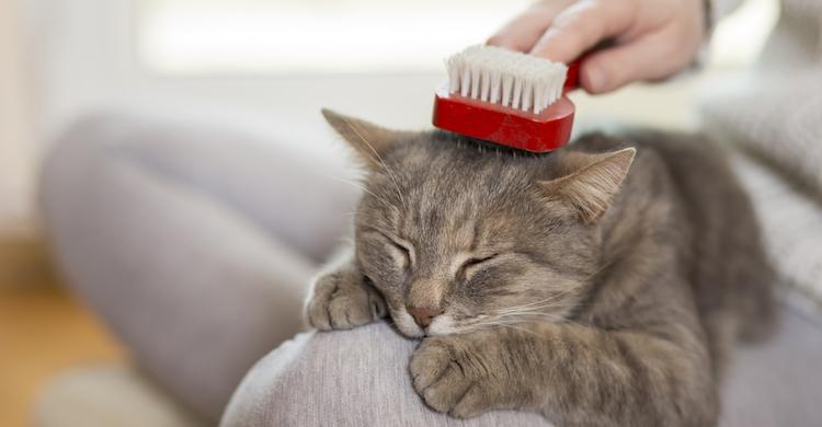 Peine y cepillo para cuidar el pelo de tu minino (iStock).