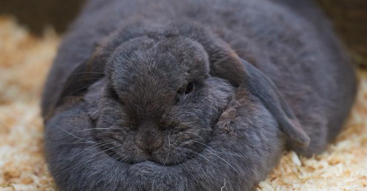 El deporte es fundamental en la vida de un conejo (Foto: iStock)