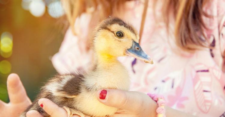 Necesitan afecto y cariño para su buen desarrollo (Foto: iStock)