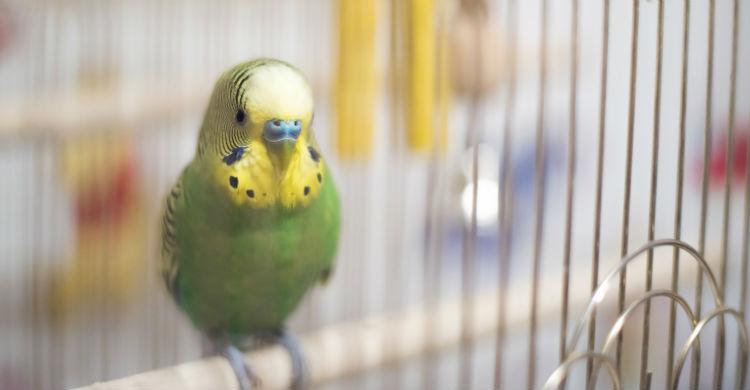 Alimentos azucarados o de origen animal pueden ser muy peligrosos para las aves (Foto: iStock)