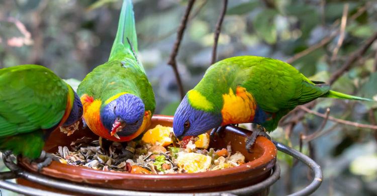 La especie determina qué pueden comer y qué no (Foto: iStock)