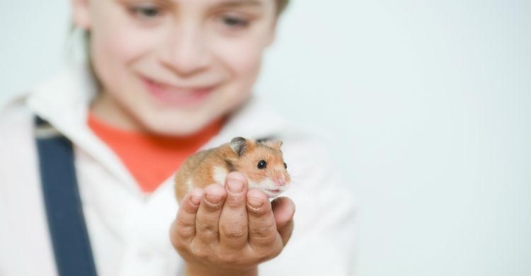 Los roedores pueden ser una opción genial como mascota (Foto: iStock)