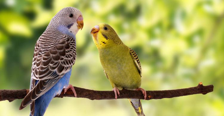 Son animales muy fieles y con miedo a la soledad (Foto: iStock)