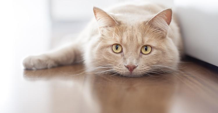 La prevención es fundamental para evitar que tu gato tenga caspa (iStock).