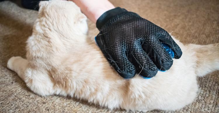 Hay que peinar al gato para eliminar la piel muerta (iStock).