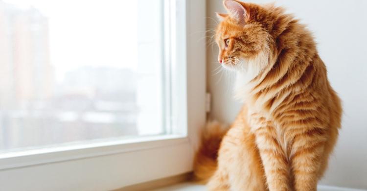 El gato, independiente a la vez que cariñoso (Istock)