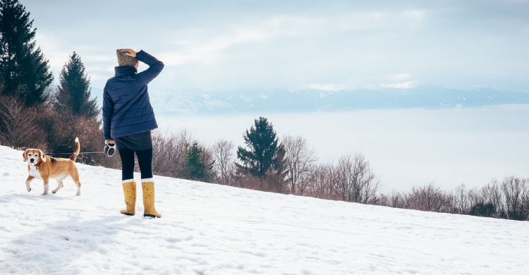 Si vas a la nieve, cuanto más peludos, mejor (Istock)