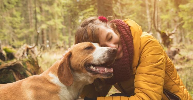 Los perros de tamaño medio se adaptan muy bien a los terrenos boscosos (Istock)