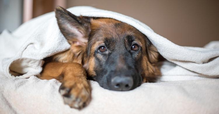 Acude a tu veterinario para que te explique los mejores tratamientos (Istock)