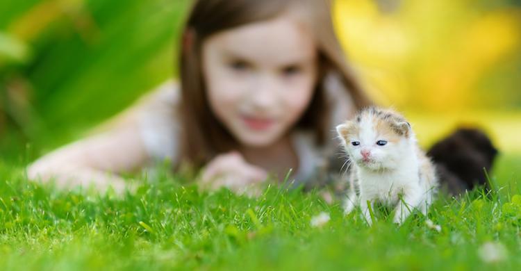 Es importante coger con cuidado al gato recién nacido (iStock).