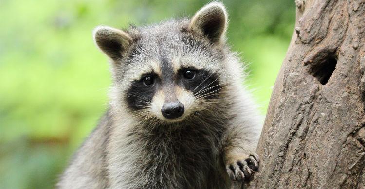 Hay animales que adoptarlos es un delito y puede acarrear grandes consecuencias (Foto: iStock)