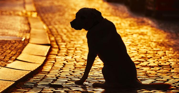 Vigila que esté en buen estado y aseado y llama a los que puedan ayudarle a encontrar un hogar (Foto: iStock)
