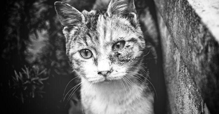 Acudir a un veterinario es fundamental antes de tomar ninguna decisión sobre el animal (Foto: iStock)