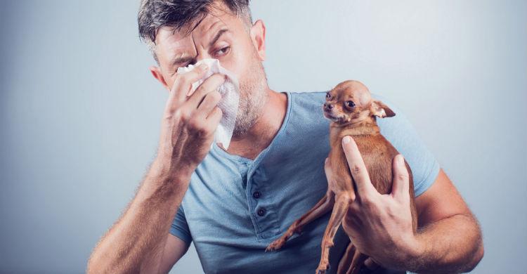 Las alergias no se curan pero se pueden tratar con fármacos (Foto: iStock)