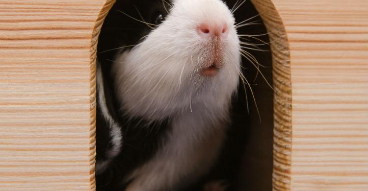 Los hámster y conejos de indias son de los favoritos de los más pequeños (Foto: iStock)