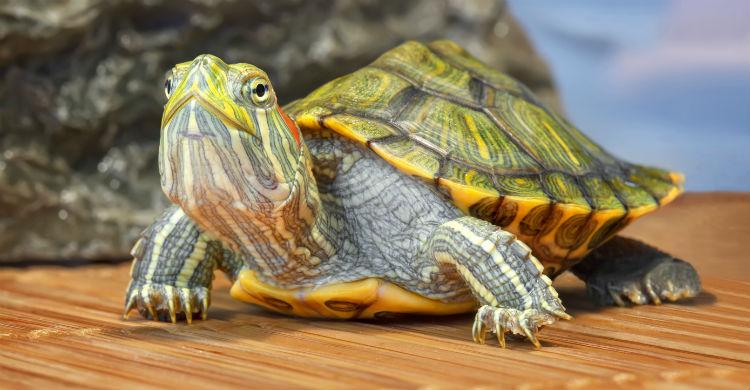 Son muchos los peligros que pueden atraer determinadas especies (Foto: iStock)