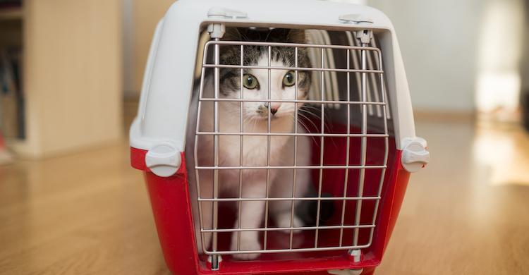 Hay que plantearse cómo vas a llevar al gatito a la consulta veterinaria (iStock).