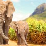 2. Elefantes (iStock)