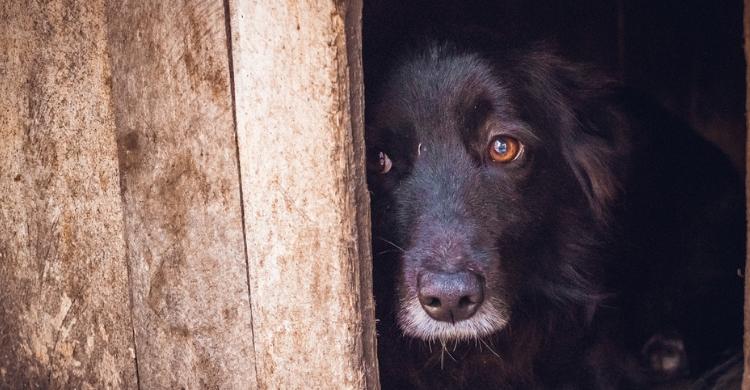 Por desgracia, el maltrato animal es más frecuente de lo que pensamos (Istock)
