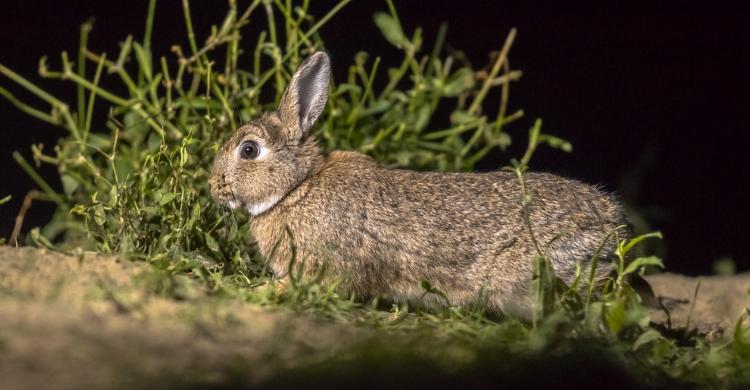 No se conoce la cifra exacta de conejos asesinados (Istock)